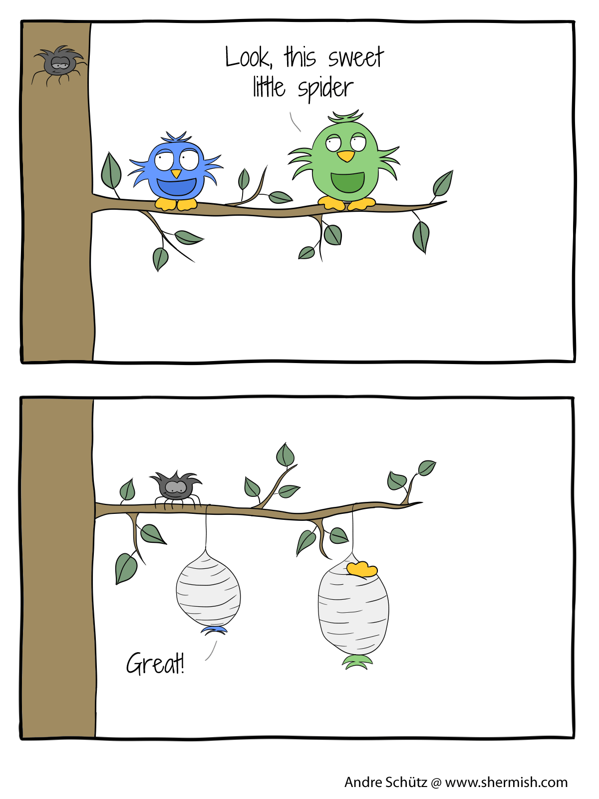 Birds: Never underestimate the little ones - sweet little spider